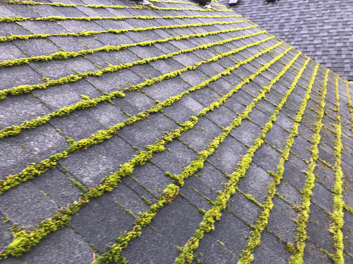 Forcewashing - Mossy Roof Cleaning - Gutter Cleaners in Vancouver WA